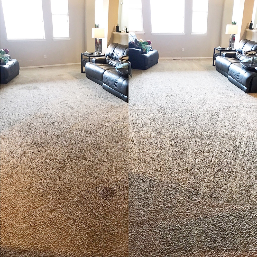 Living Room Spot Removal Fort Collins Colorado